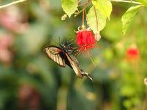 Papillon coloré tropical Photo stock