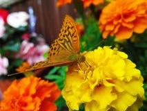 Papillon comme forme d'art image stock