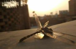 Papillon comptant de derniers souffles en été chaud photo stock