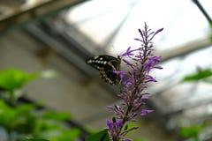 Papillon détaillé avec le fond coloré image libre de droits