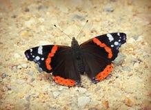 Papillon d'amiral Photos libres de droits