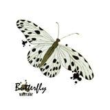 Papillon d'aquarelle Photo libre de droits