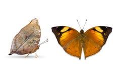 Papillon d'Autumn Leaf photographie stock
