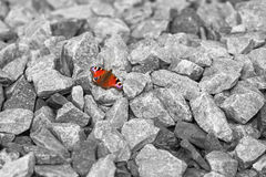 Papillon d'espoir images stock