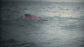 Papillon d'homme (de vintage 8 superbe) nageant l'eau libre banque de vidéos