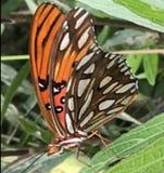 Papillon d'insecte Photos stock