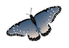 Papillon d'isolement réaliste multicolore illustration stock