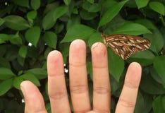 Papillon dans l'équilibre Image stock