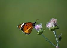 Papillon dans l'arbre Photographie stock