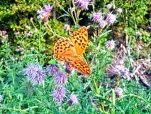 Papillon dans la forêt images stock