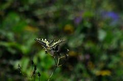 Papillon dans la forêt posant sur une fleur image stock