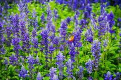 Papillon dans les domaines de fleur Photographie stock libre de droits