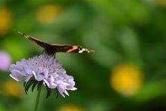 Papillon de beauté à la lumière du jour Images stock