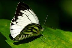 Papillon, de beaux et colorés insectes image stock