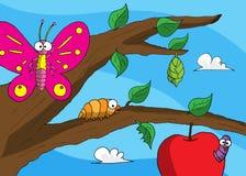 Papillon de cocon de Caterpillar Image libre de droits