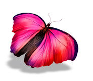 Papillon de couleur, Image libre de droits