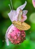 Papillon de feuille Images stock