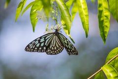 Papillon de fleur Photographie stock