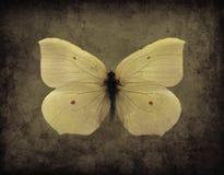 Papillon de grunge de vintage Photographie stock