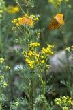 Papillon de manteau d'empereur Photographie stock libre de droits