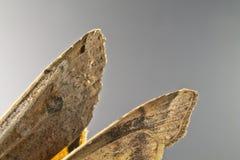 Papillon de mite Images libres de droits
