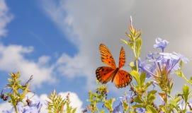 Papillon de monarque dans plein Wing Spread Image libre de droits