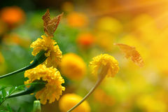 Papillon de monarque sur le souci dans le highkey Photos stock