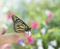 Papillon de monarque sur un doigt Photographie stock