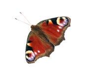 Papillon de paon images stock