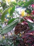 Papillon de paon Image stock