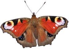 Papillon de paon d'isolement photo libre de droits