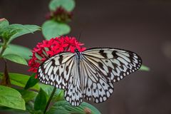 Papillon de papier de cerf-volant sur les fleurs rouges photographie stock libre de droits