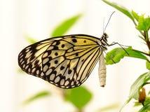 Papillon de papier de cerf-volant Photographie stock