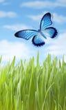 Papillon de pré d'été Image libre de droits