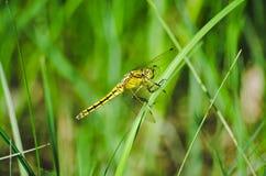 Papillon de ressort Photographie stock libre de droits