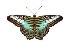 Papillon de tondeuse Images stock
