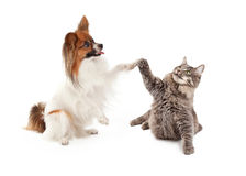 Papillon Dog and Cat High Five. A cute Papillon dog and cat raising their paws to high five stock photo
