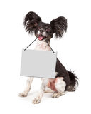 Papillon Dog Holding Blank Sign Stock Image