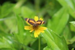 Papillon en fleur Image stock