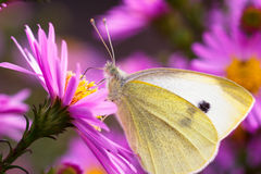 Papillon en gros plan sur la fleur Photo stock
