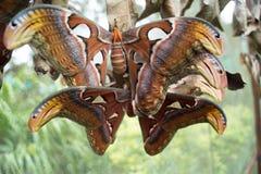 Papillon en Mae Rim Chiang Mai en Thaïlande Photos stock