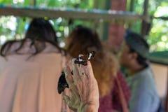 Papillon en main en parc de papillon d'île de Bali, Indonésie Photographie stock libre de droits