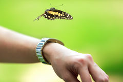 Papillon en main en parc la beauté de la nature Foyer sélectif Photographie stock
