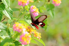 Papillon en nature Photos libres de droits