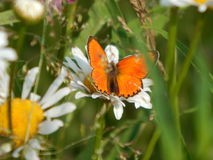 Papillon en nature Photo stock