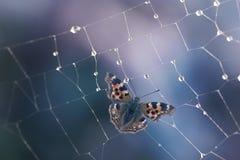 Papillon en Web Images stock