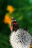 Papillon et bourdon Image stock
