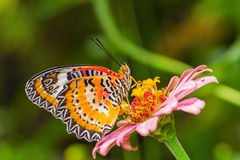 Papillon et fleur Image libre de droits