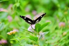 Papillon et fleur Photo libre de droits
