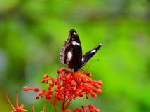Papillon et fleur Image stock